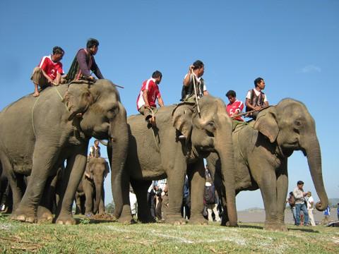 Lễ hội đua voi Tây Nguyên là lễ hội truyền thống rất quan trọng của những người dân nơi đây. Ảnh: ST