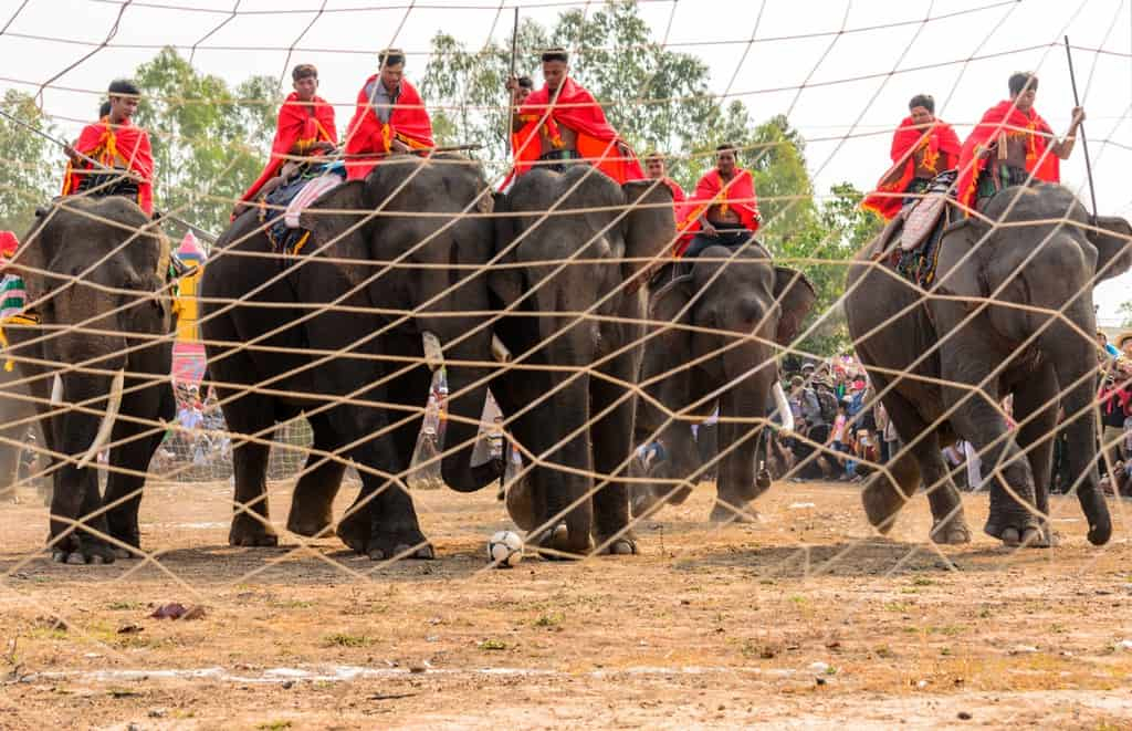 Voi thi đá bóng, một hình ảnh vô cùng đặc sắc chỉ có thể thấy tại lễ hội đua voi Tây Nguyên. Ảnh ST
