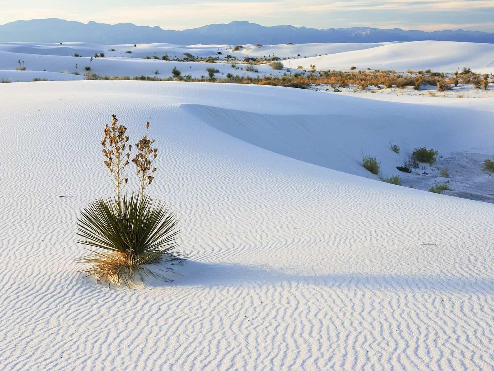 Đồi cát trắng - Bàu trắng với màu trắng tinh khiết lạ mắt