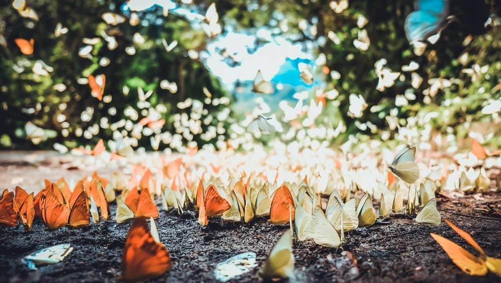 Lạc lối giữa cánh bướm đẹp ngỡ ngàng ở vườn quốc gia Cúc Phương