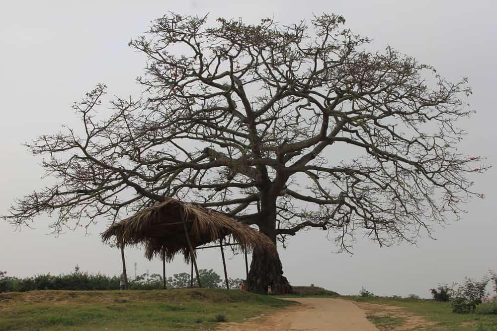 Thân cây sơ xác vào mùa đông