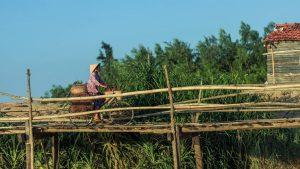 Check-in cầu gỗ Ông Cọp Phú Yên – cây cầu gỗ dài nhất Việt Nam