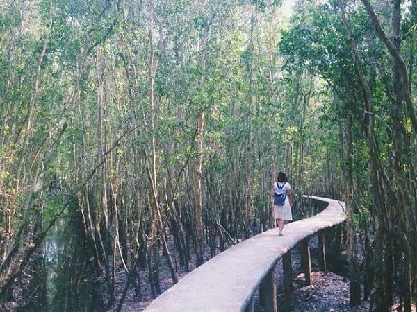 Con đường xuyên rừng - Điểm sống ảo với những bức hình cực chất