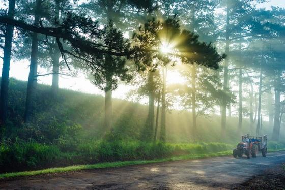 Đà Lạt mờ ảo trong màn sương vào mỗi sớm mai thức dậy
