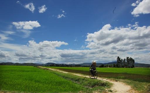 Vẻ đẹp thanh bình đậm chất quê hương của những cánh đồng lúa nơi Phú Yên