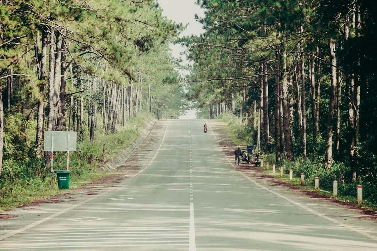 Những con đường rợp bóng thông. Hình: we25