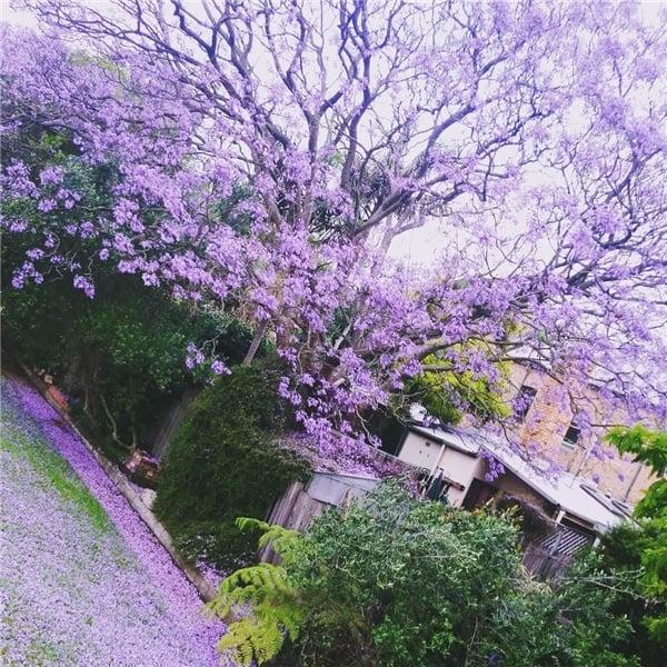 Vẻ đẹp nên thơ tại một góc phố ngập màu hoa phượng