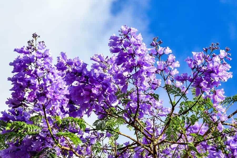 Chỉ cần ngắm màu hoa phượng cảm giác tâm trạng nhẹ nhàng vô cùng