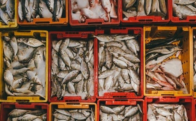Các loại cá nước mặn và nước ngọt vô cùng đa dạng