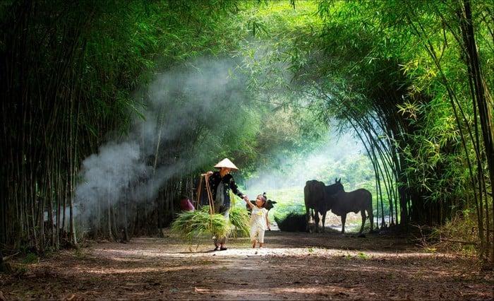 Hình ảnh em bé cùng bà đi theo bà ra đồng cắt cỏ, ngang qua luỹ tre làng ở Tây Ninh gợi lại những hình ảnh thơ bé bình dị êm đềm của nhiều người