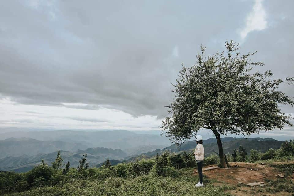 Cây táo cô đơn ở Xím Vàng. Hình: Hoàng Linh Hà