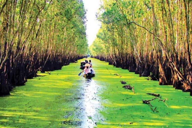 Bèo cám phủ kín cả khúc sông trong rừng tràm Trà Sư