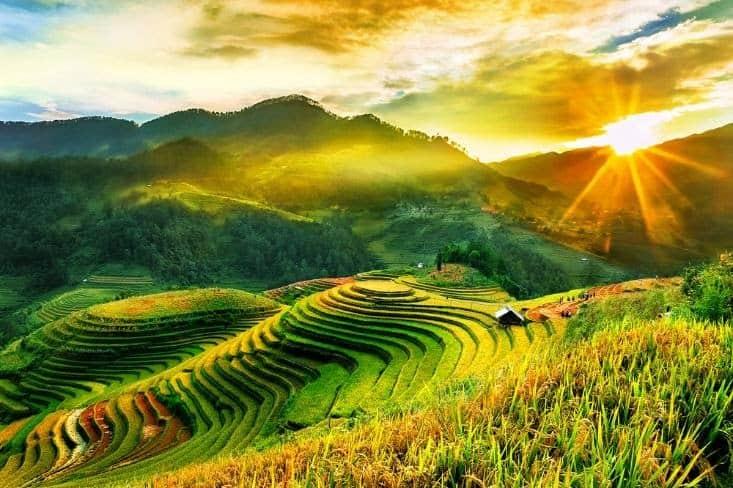 Màu xanh của ruộng lúa dưới ánh nắng mặt trời càng thêm nổi bật