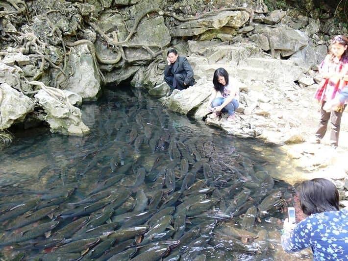 Suối cá thần Cẩm Lương.