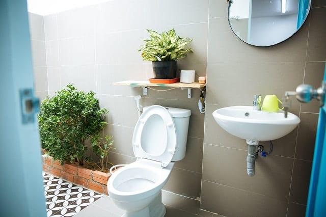 Chủ nhà như đã mang cả một khu vườn vào bên trong nhà vệ sinh vậy