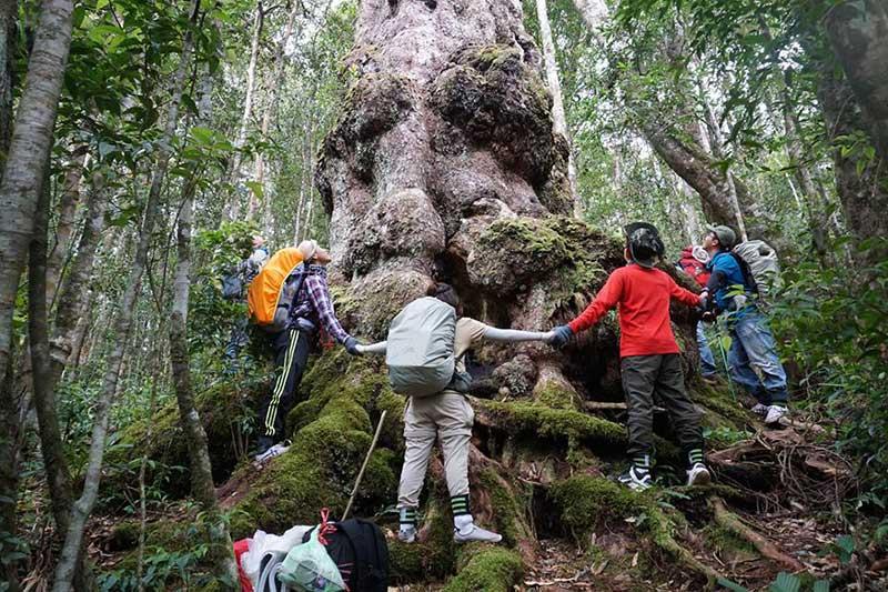Ngắm nhìn những cây cổ thụ nhiều người ôm không xuể ở vườn quốc gia Chư Yang Sin