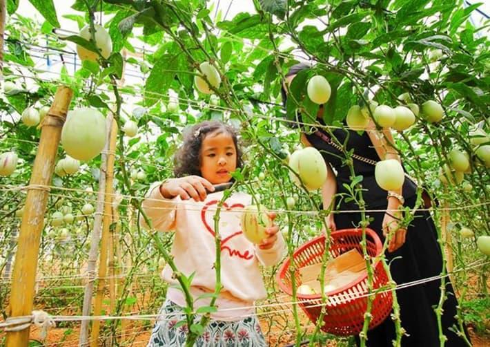 Vườn rau Đà Lạt một ngày trải nghiệm cho thành viên nhí học hỏi nhiều điều