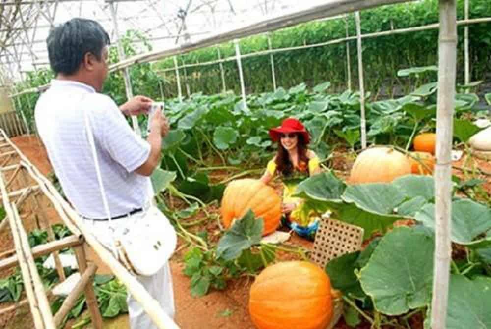 Vườn trái cây khổng lồ không chỉ trẻ nhỏ mà người lớn cũng vô cùng thích thú