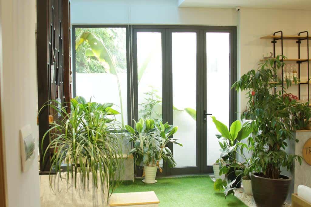 Không gian tràn ngập cây xanh ở The Local Stay