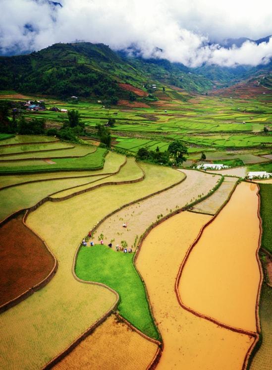 Những gam màu khác nhau trên ruộng bậc thang Tú Lệ, nằm giữa 3 ngọn núi cao Khau Phạ, Khau Thán và Khau Song. Hình: Nguyễn Tấn Tuấn