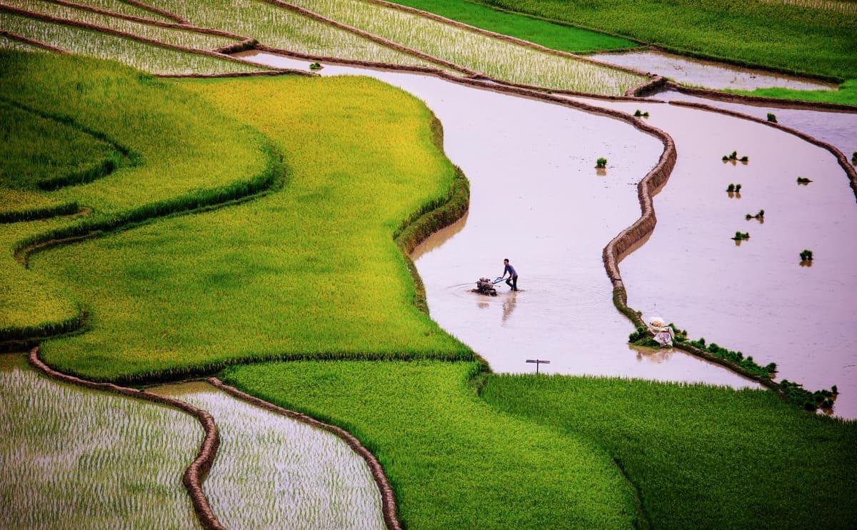 Tú Lệ hiện ra với gam màu xanh của lúa đã cấy. Hình: Nguyễn Tấn Tuấn