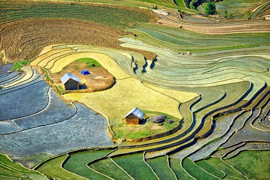 Những căn nhà nhỏ giữa ruộng. Hình: Sưu tầm