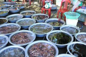 Cách phòng tránh ngộ độc hải sản khi đi du lịch hè