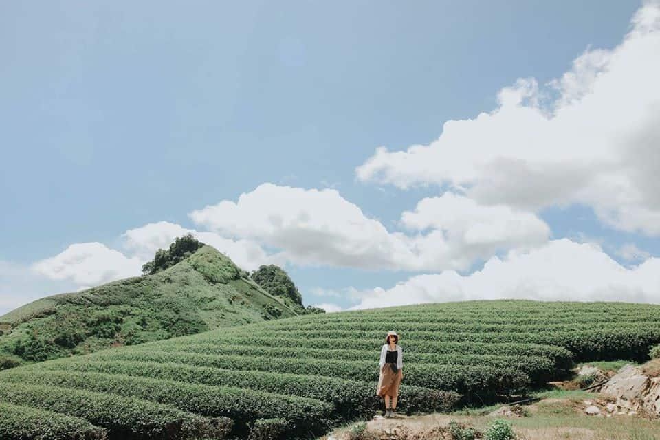 Những đồi chè trên cao. Hình: Hoàng Linh Hà