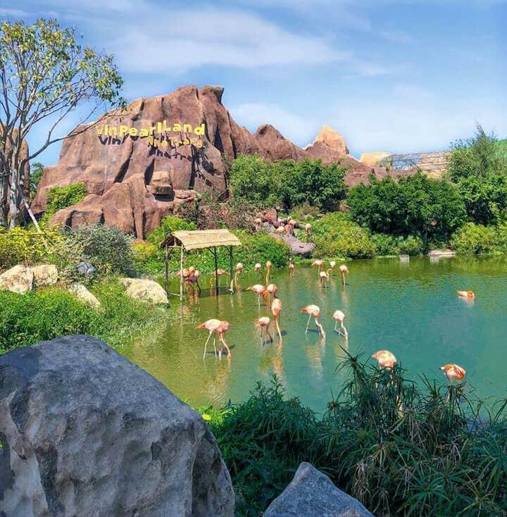 Ngắm Hồng Hạc ở Vinpearl Land