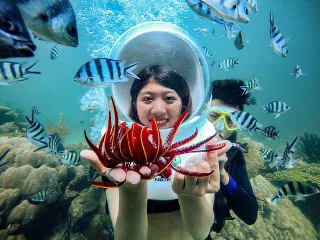 Vô vàn sinh vật biển. Hình: Sưu tầm