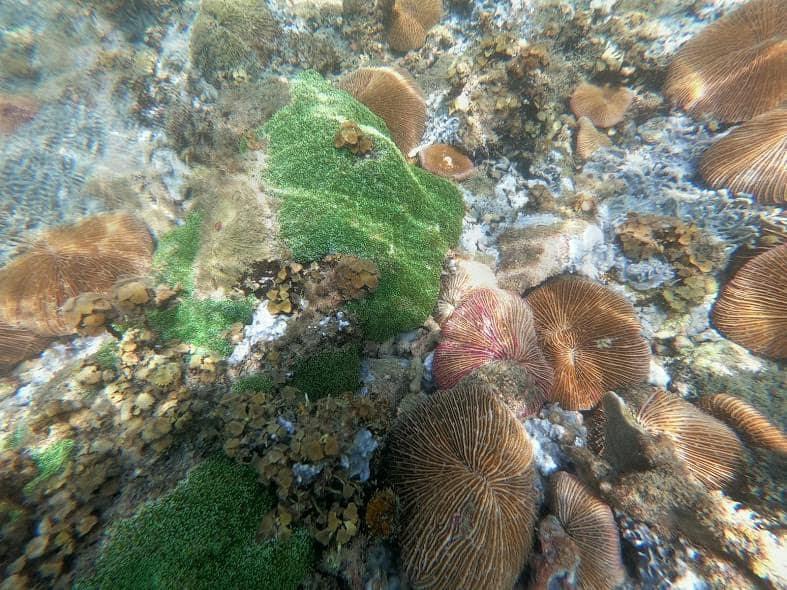 Thảm thực vật phong phú dưới đáy biển. Hình: Sưu tầm