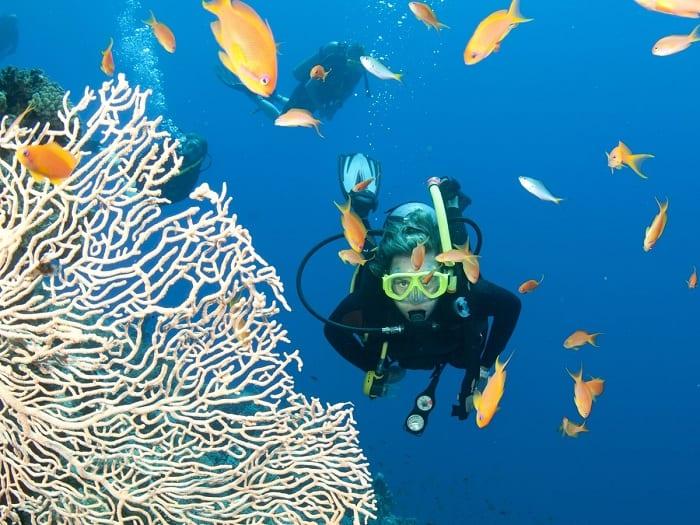 Đến đảo Hòn Tằm lặn ngắm san hô