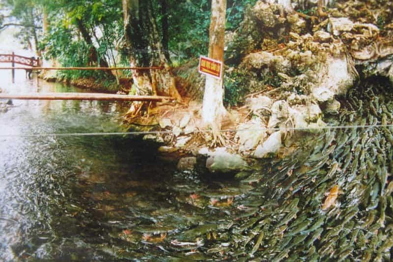 Suối cá thần Cẩm Lương địa điểm du lịch không thể bỏ qua