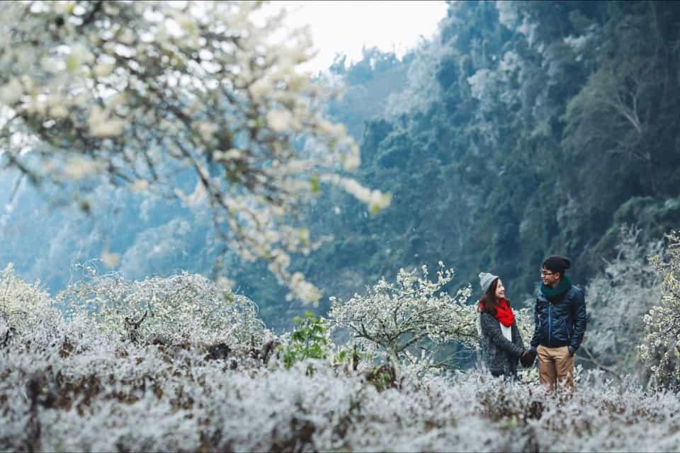 Mộc Châu mùa hoa ban trắng. Hình: Sưu tầm