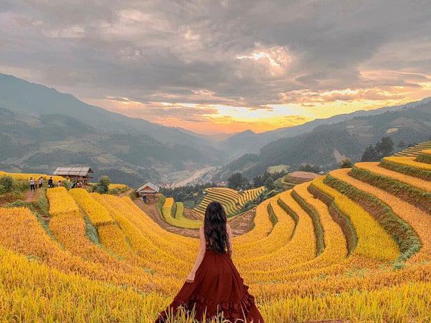 Mùa lúa phủ vàng Mù Cang Chải. Hình: Phạm Lan Hương