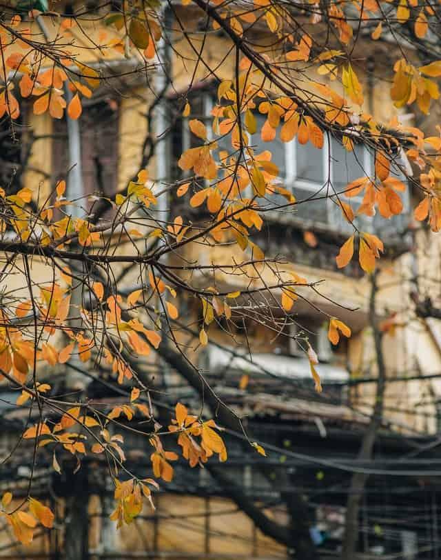 Những tán cây bắt đầu chuyển vàng trong mùa thu