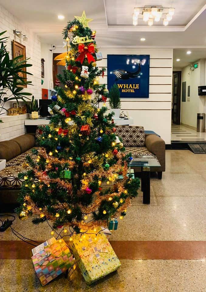 Không gian ấm cúng ngay quầy tiếp tân của Whale Hotel