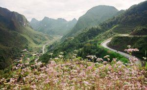 Top 6 cung đèo đẹp nhất ở Hà Giang