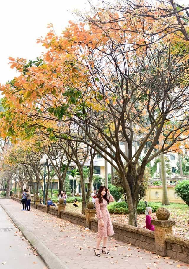 Hà Nội những ngày tháng 10 ngập tràn trong sắc lá vàng. Hình: Sưu tầm