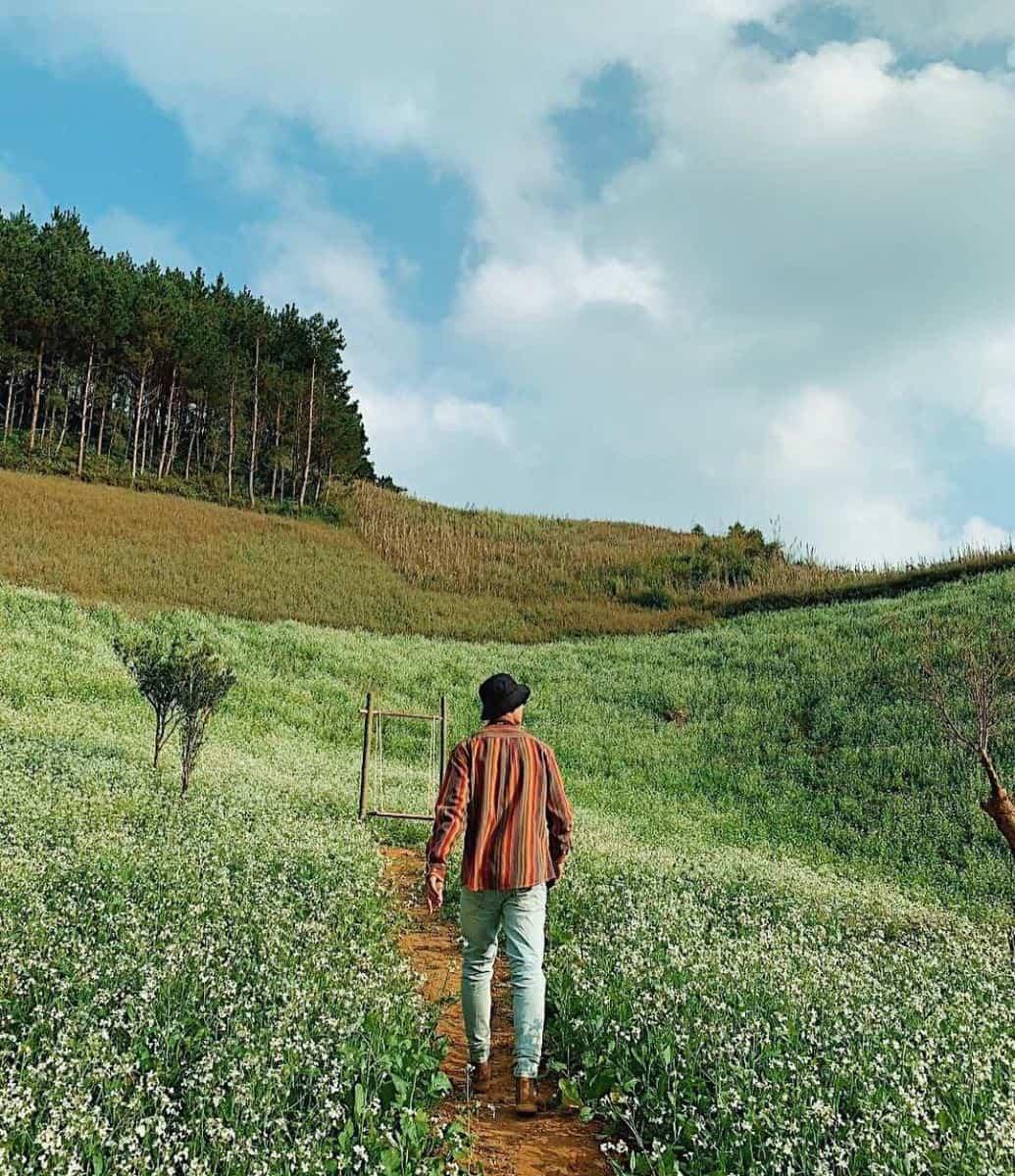 Tháng 10 là thời điểm Mộc Châu bước vào mùa hoa cải trắng. Hình: Sưu tầm