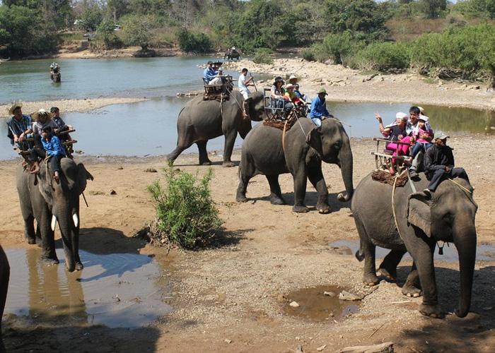 Khi lao động mệt và tâm sinh lý bất thường, voi có thể phản kháng khiến du khách bị thương. Ảnh: Báo Tây Nguyên