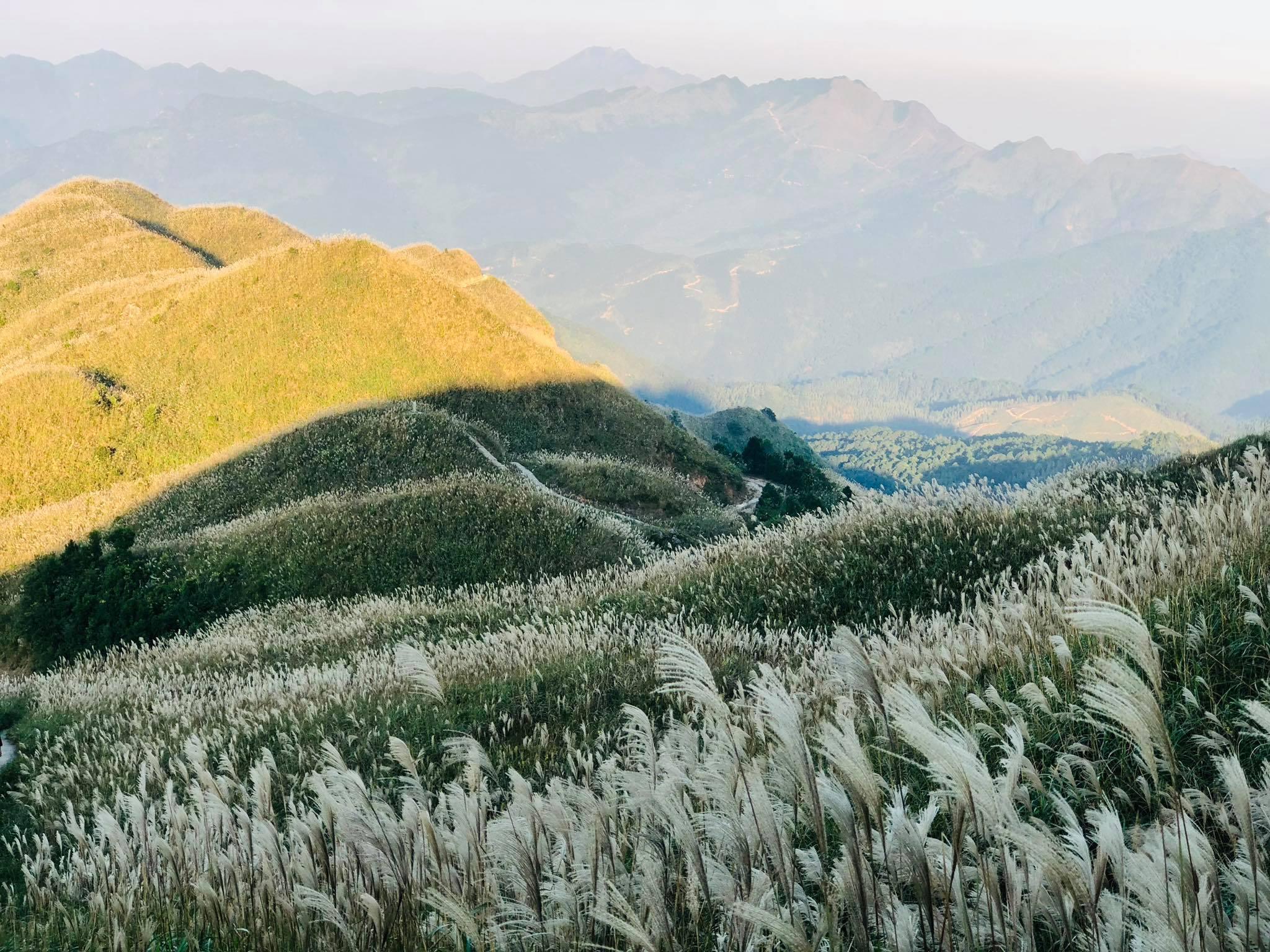 Mùa cỏ lau Bình Liêu từ tháng 10 đến tháng 11. Hình: Minh Diep