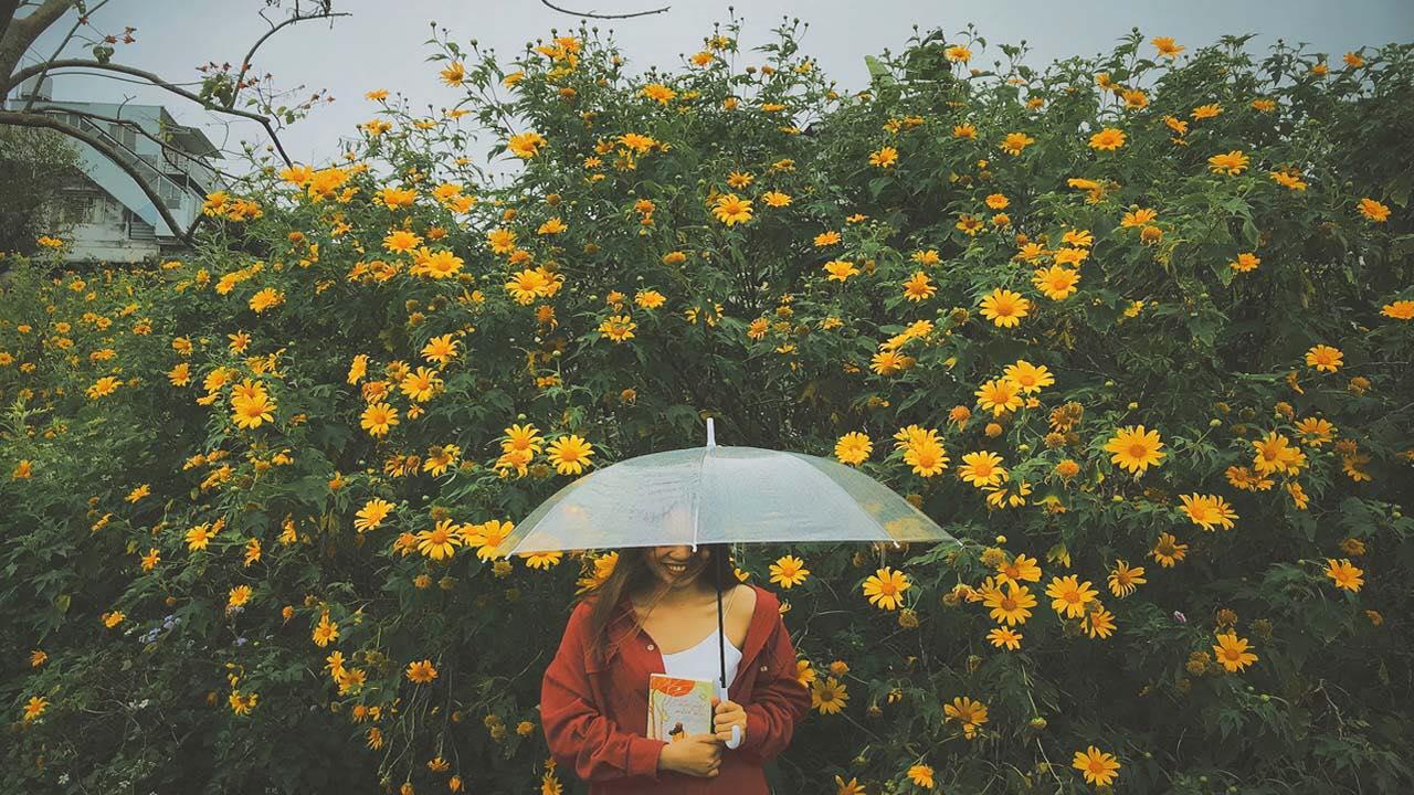 Hoa dã quỳ có khắp các cung đường. Hình: Sưu tầm