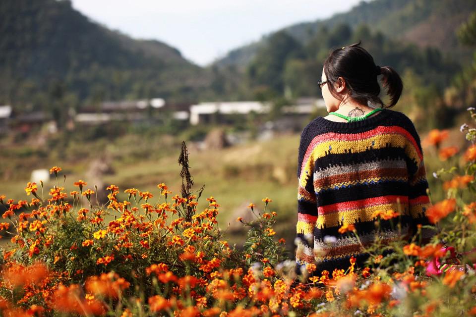 Tháng 11 cũng là mùa của hoa cúc cam. Hình: Sơn Vương Tùng