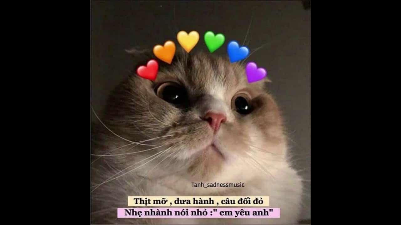 Dễ dàng tìm thấy những meme về thú cưng với caption dễ thương trên internet - Nguồn ảnh: Internet