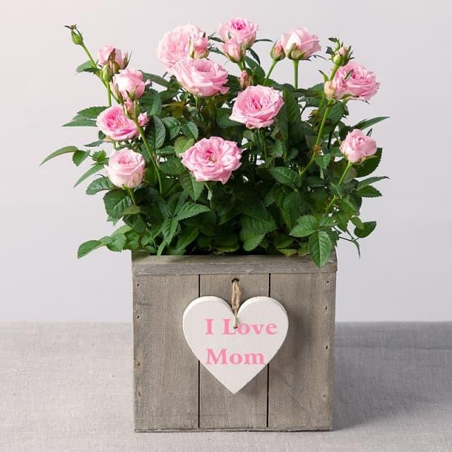 Hoa tươi là một trong những món quà tặng mẹ ý nghĩa
