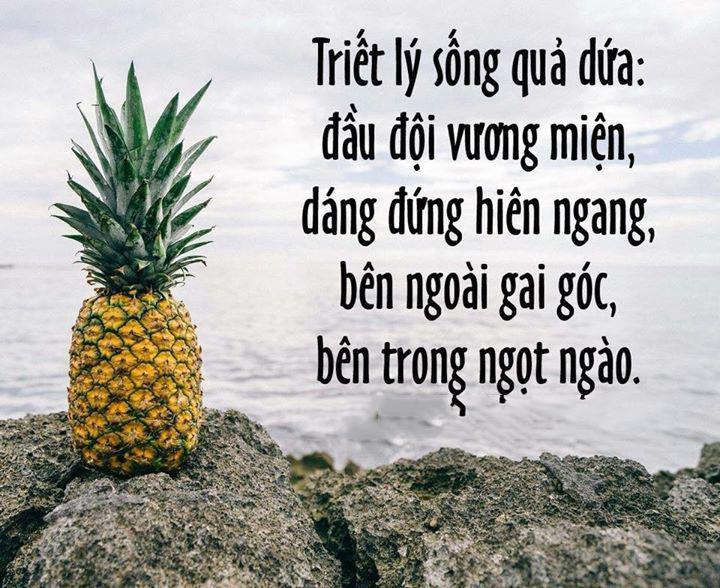 """Câu nói hay ý nghĩa về cuộc sống đáng suy ngẫm """"Hãy sống như trái dứa"""" - Nguồn ảnh: Internet"""
