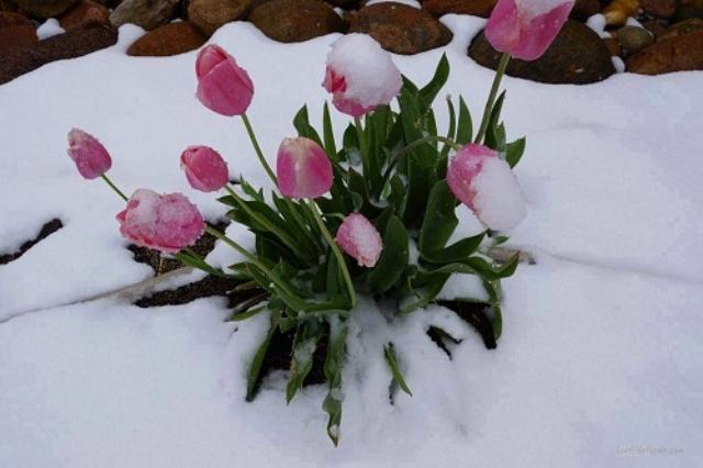 Sống với tinh thần thép, luôn không ngừng cố gắng, bạn sẽ là bông hoa đặc biệt nhất. Ảnh: Internet