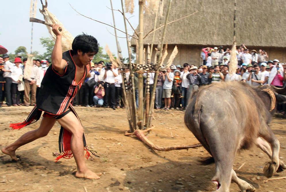 Lễ hội đâm trâu diễn ra từ tháng Chạp tới tháng 3 âm lịch