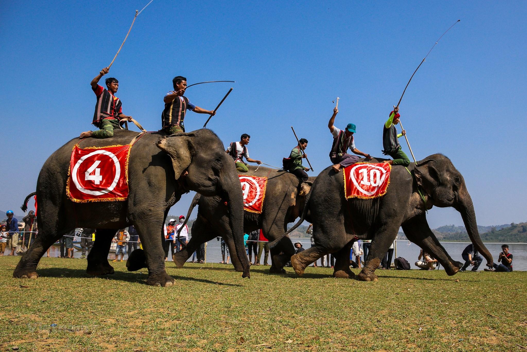Lễ hội đua voi tại tỉnh Đăk Lăk